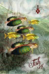 34. SSL Fish